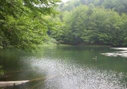 Rezerwat przyrody Zwiezło - Duszatyn
