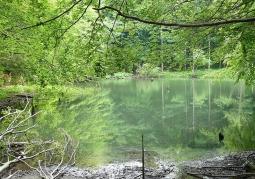Jeziorka Duszatyńskie - Rezerwat przyrody Zwiezło