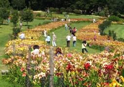 Arboretum - Wojsławice