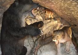 Jaskinia Niedźwiedzia - Rezerwat przyrody Jaskinia Niedźwiedzia