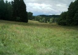 Łąka na Raduni