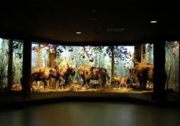 Zdjęcie: Muzeum Przyrodniczo - Leśne