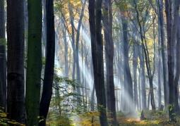 Bytom - Rezerwat buków Segiet