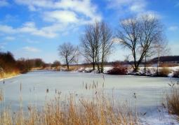 Zdjęcie: Bytom - Zespół Przyrodniczo Krajobrazowy Żabie Doły