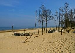 Rezerwat Przyrody Ptasi Raj