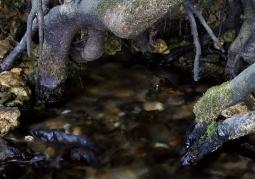 Granatowe Źródła