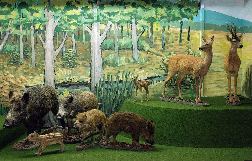 Muzeum Przyrodnicze Bieszczadzkiego Parku Narodowego