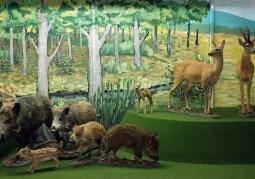 Muzeum Przyrodnicze Bieszczadzkiego Parku Narodowego - Ustrzyki Dolne