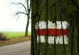 Czerwony szlak w Rogalinie.