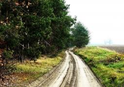 Zdjęcie: Pejzaż okolic Rogalinka