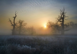 Zdjęcie: Rogaliński Park Krajobrazowy o poranku