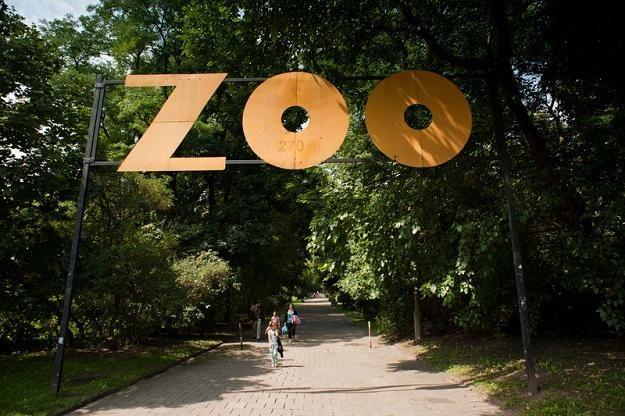 Ogród zoologiczny w warszawie
