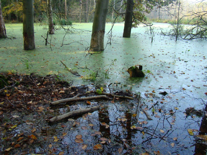 Bagno na terenie rezerwatu