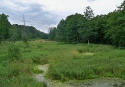 Rezerwat przyrody Źródła Królewskie - Kozienicki Park Krajobrazowy
