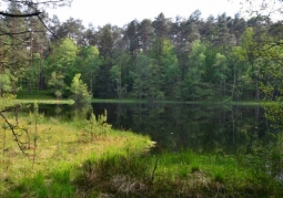 Jeziora Drawieńskiego Parku Narodowego