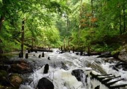 Rzeki Drawieńskiego Parku Narodowego