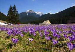 Dolina Chochołowska - Tatrzański Park Narodowy