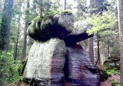 grzyby skalne