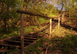 Rezerwat przyrody Lasek Miejski nad Olzą