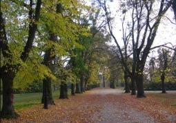 Aleja w parku ciechocińskim
