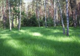 Las w Bolimowskim Parku Krajobrazowym
