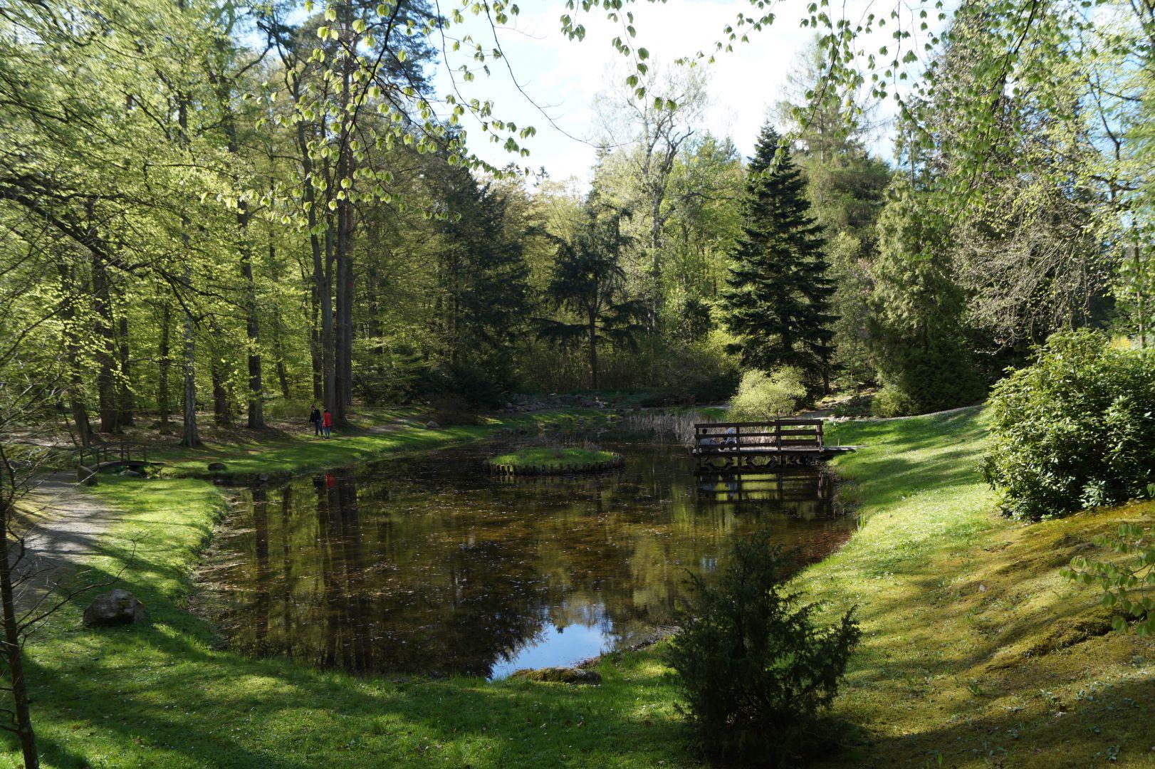 Bujna zieleń w arboretum w Wirtach