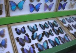 Muzeum Motyli Arthropoda - Bochnia