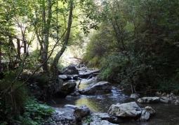 Rezerwat Wąwóz Homole
