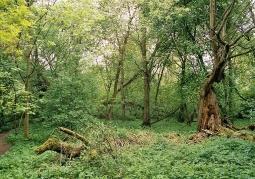 Drzewostan w środkowej części wyspy