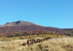 Jesienna Tarnica z Wołosatego