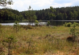 Torfowisko i jezioro Wałachy w tle
