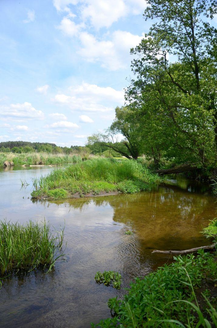 Bagienna Dolina Drwęcy