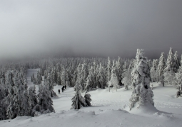 Rezerwat przyrody Śnieżnik Kłodzki - Śnieżnicki Park Krajobrazowy