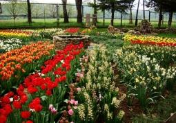 Ogród Biblijny Caritas - Myczkowce