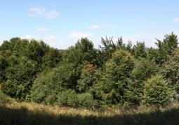 Przyroda rezerwatu