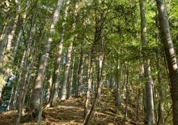 Rezerwat przyrody Woronikówka