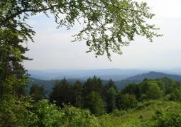 Obszar leśny