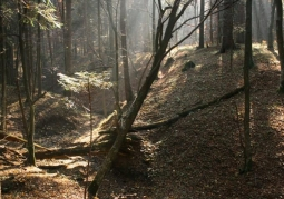 Rezerwat przyrody Chwaniów