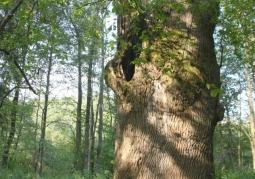 Drzewostan w rezerwacie