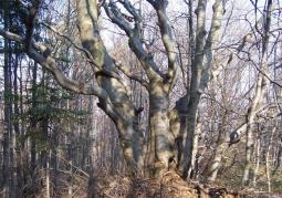 Rezerwat przyrody Dyrbek - Park Krajobrazowy Gór Słonnych
