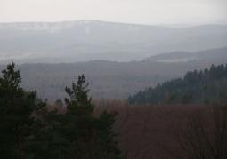 Bujne zalesienie rezerwatu