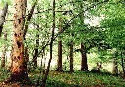 Rezerwat przyrody Na Opalonym - Park Krajobrazowy Gór Słonnych