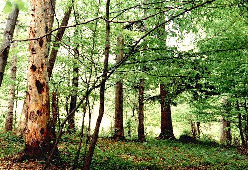 Rezerwat przyrody Na Opalonym