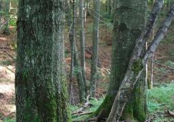 Rezerwat przyrody Na Oratyku