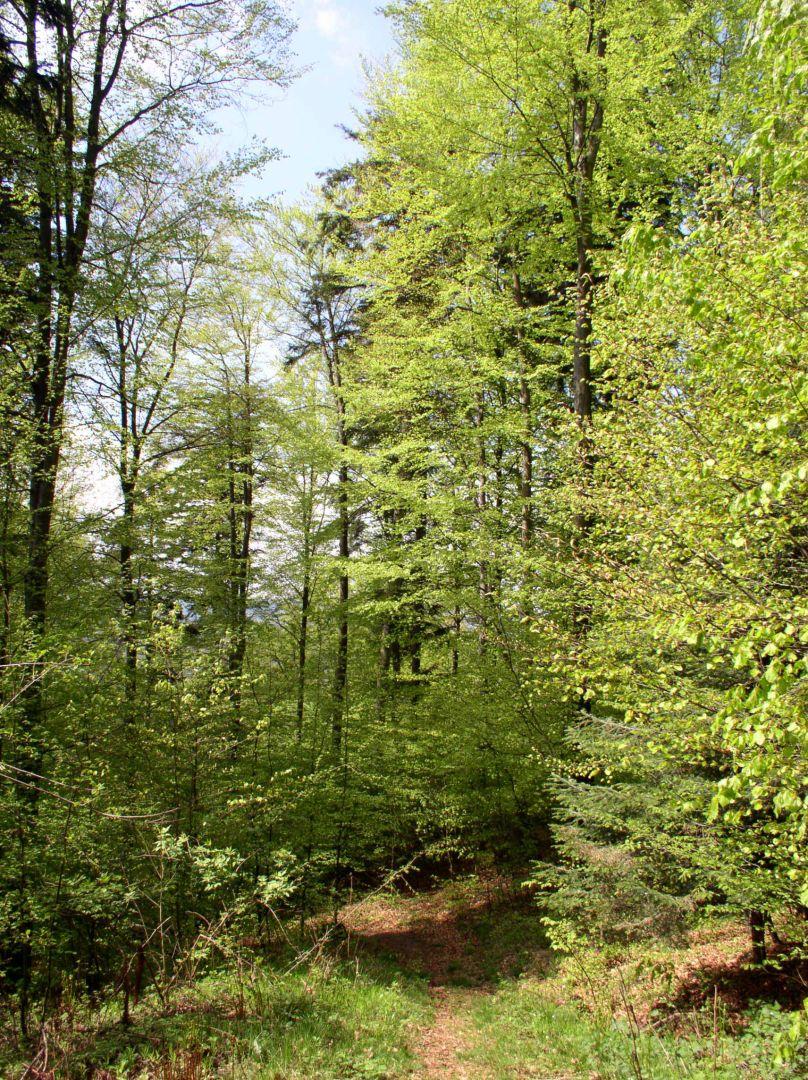 Rezerwat przyrody Polanki
