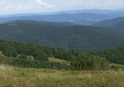 Jawornik - Bieszczadzki Park Narodowy