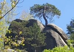 Drzewo wśród skał