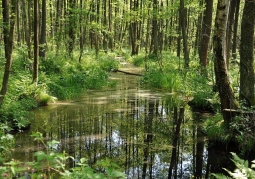 Rezerwat Czerwone Bagno - Biebrzański Park Narodowy