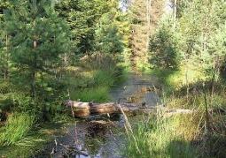 Rezerwat przyrody Kurze Grzędy - Kaszubski Park Krajobrazowy