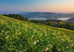 Widok z Dąbrowskiej Góry